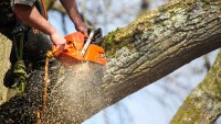 What Are Different Courses Offered To Become A Tree Surgeon
